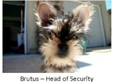 Brutus - Head of Security